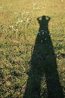 Tall shadow in daisies