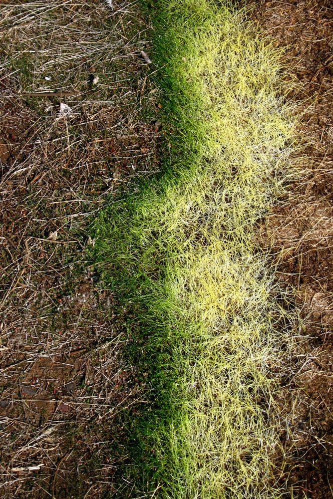 Gras fade