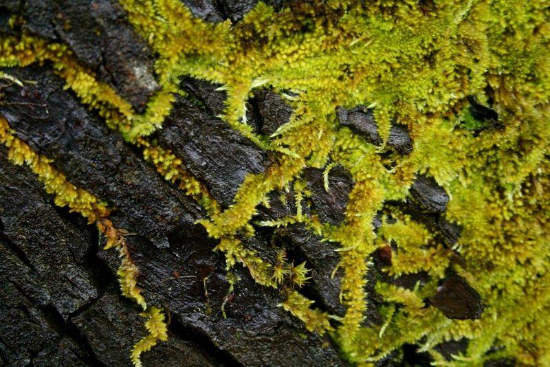 Moss trails