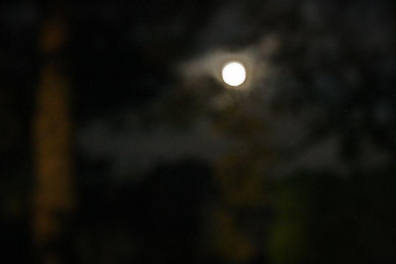 Fuzzy moon