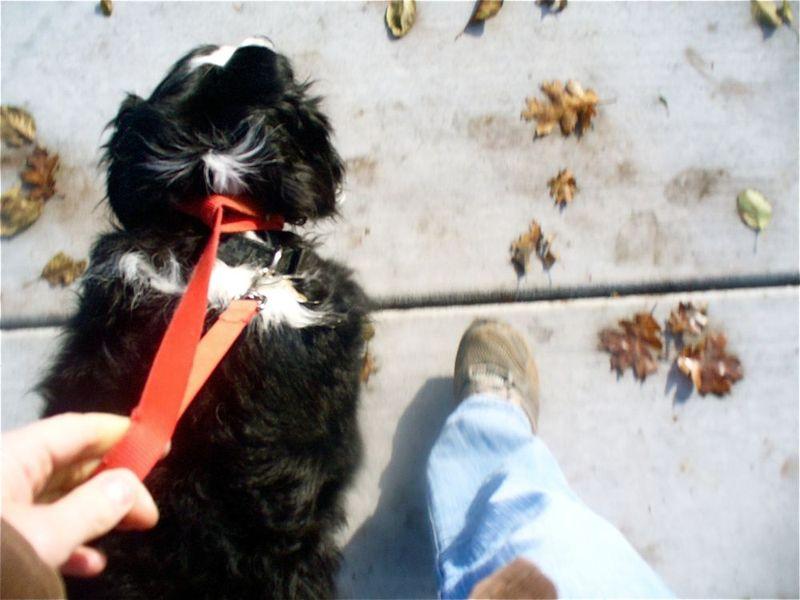 Walking Sadie
