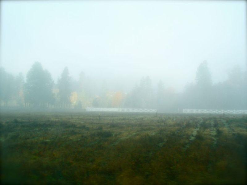 Cemetery in fog
