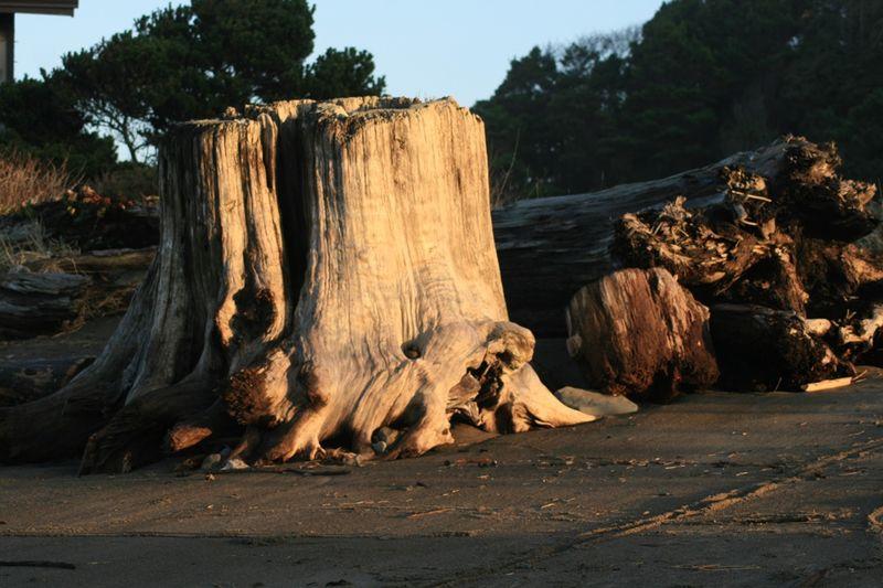 Stump on beach