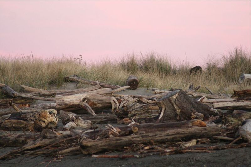 Driftwood and pink sky