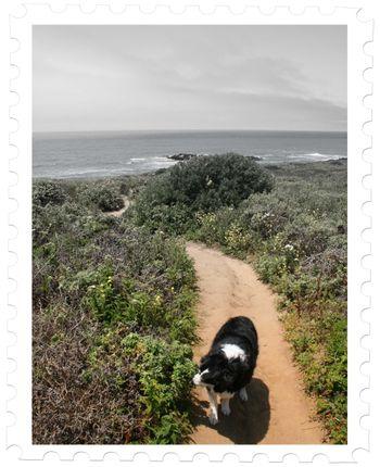 Sadie and ocean
