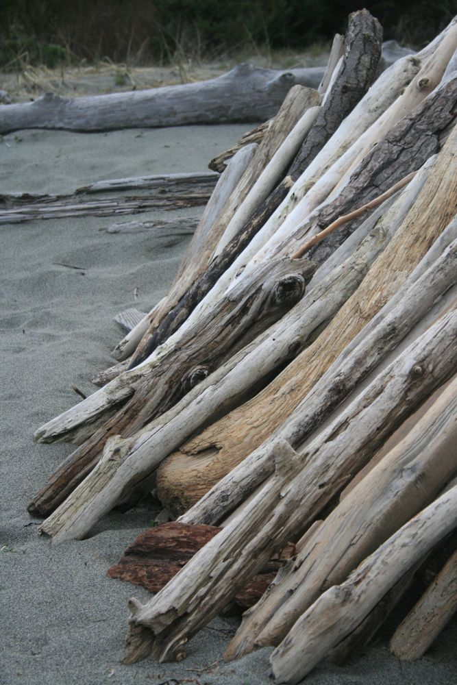 Leaning driftwood