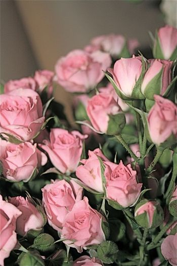 Little pinks