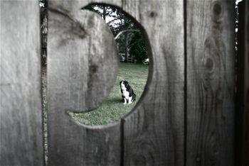Sadie in moon