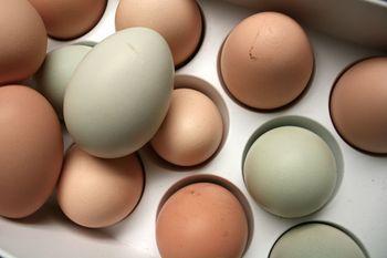 Eggs all