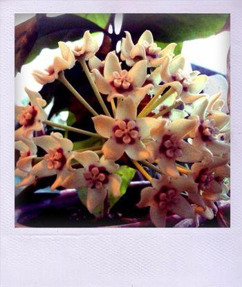 Heidi's flower