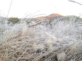 Cold grass head