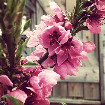 Spring5