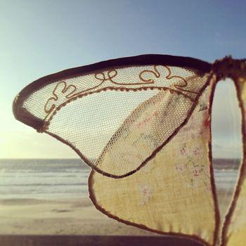 Beach moth 2