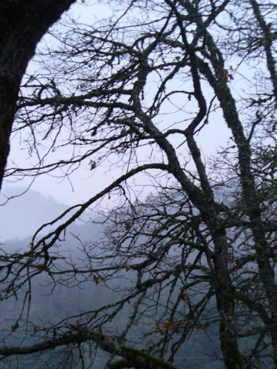 Fog_in_branches