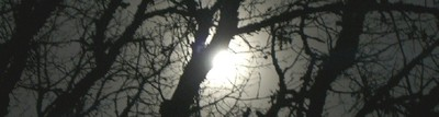 Moon_in_branches_2