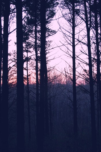 Vr_trees_and_sunset_2